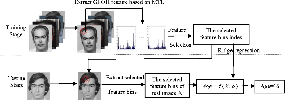Figure 1 for Multi-task GLOH feature selection for human age estimation