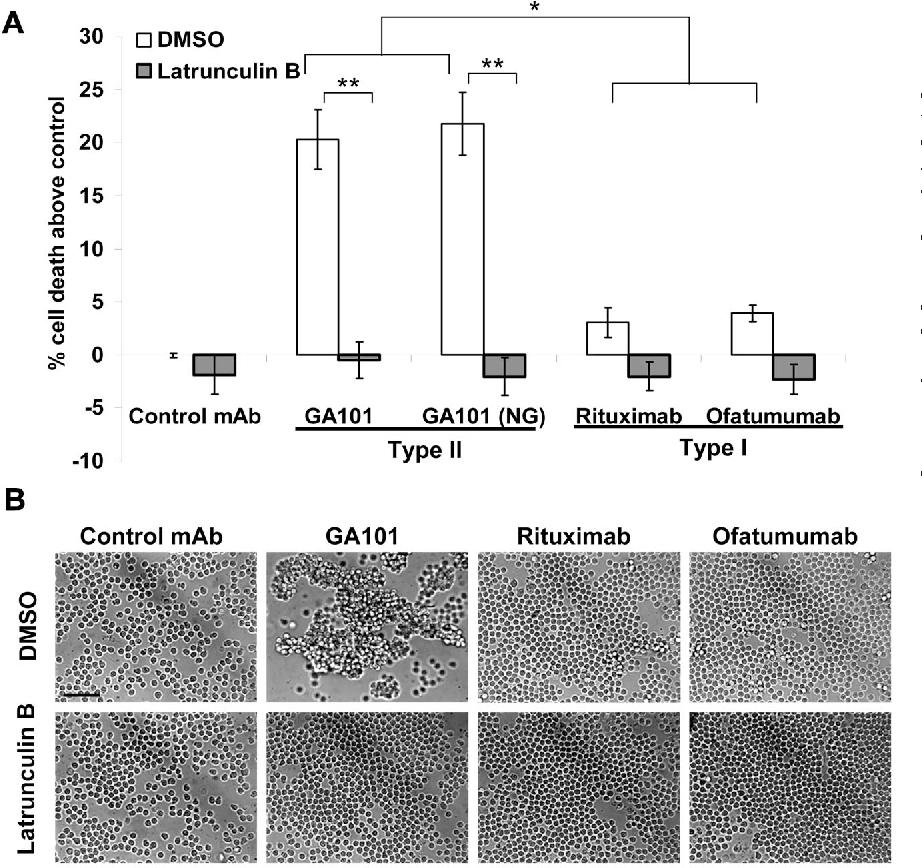 Figure 3 from Novel type II anti-CD20 monoclonal antibody (GA101