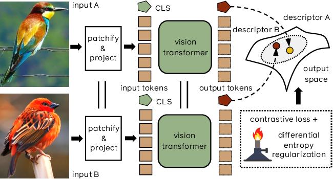 Figure 1 for Training Vision Transformers for Image Retrieval