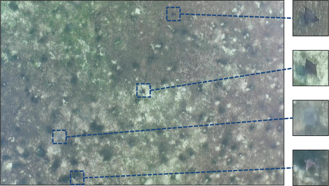 Figure 1 for Stingray Detection of Aerial Images Using Augmented Training Images Generated by A Conditional Generative Model