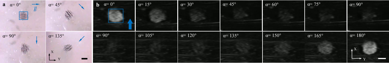 Figure 3 for Magnetic Navigation of a Rotating Colloidal Swarm Using Ultrasound Images