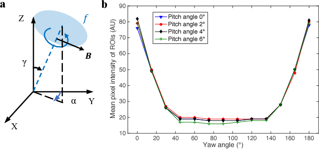 Figure 4 for Magnetic Navigation of a Rotating Colloidal Swarm Using Ultrasound Images