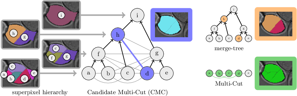 Figure 1 for The Candidate Multi-Cut for Cell Segmentation