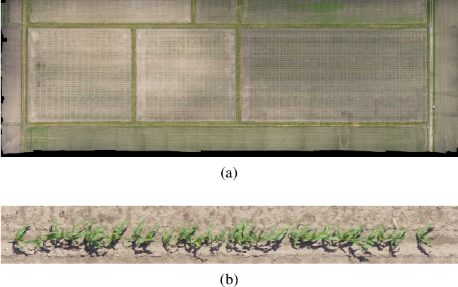 Figure 1 for Deep Transfer Learning For Plant Center Localization