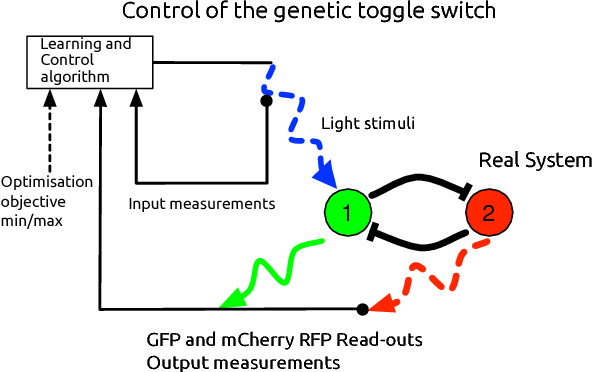 Figure 1 for Toggling a Genetic Switch Using Reinforcement Learning