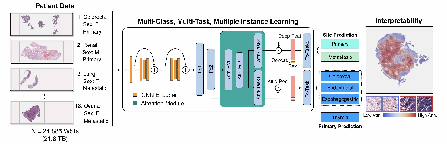 Figure 1 for Deep Learning-based Computational Pathology Predicts Origins for Cancers of Unknown Primary