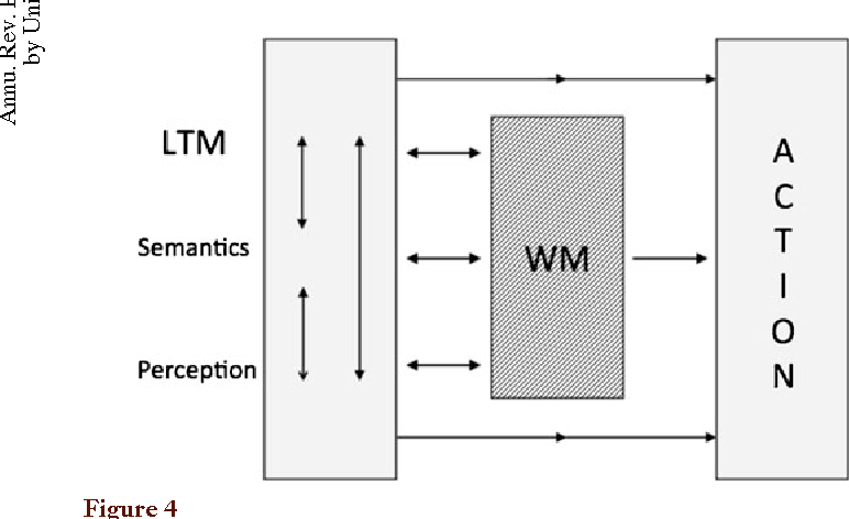 Figure 4 My current view of the complex and multiple links between working memory (WM) and long-term memory (LTM).