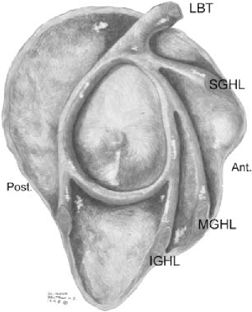 The middle glenohumeral ligament: normal anatomy, variants and ...