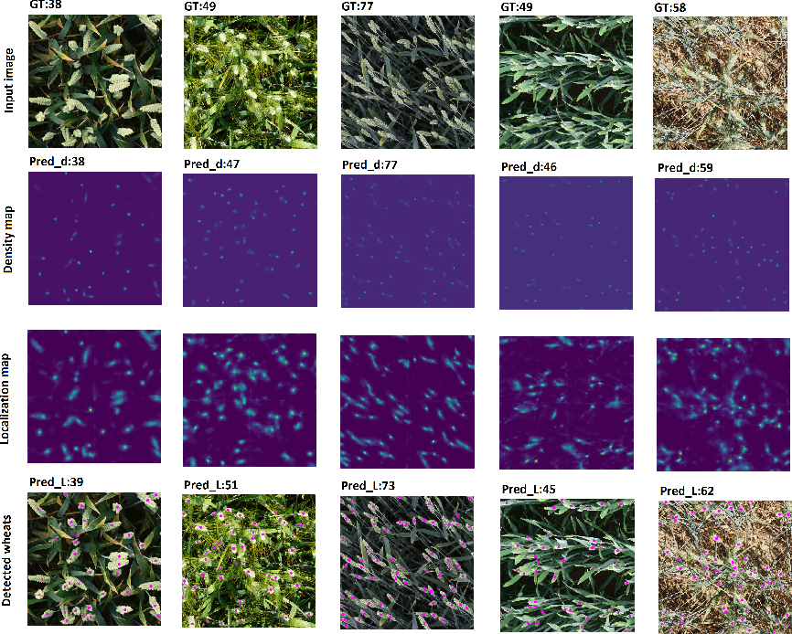 Figure 4 for WheatNet: A Lightweight Convolutional Neural Network for High-throughput Image-based Wheat Head Detection and Counting