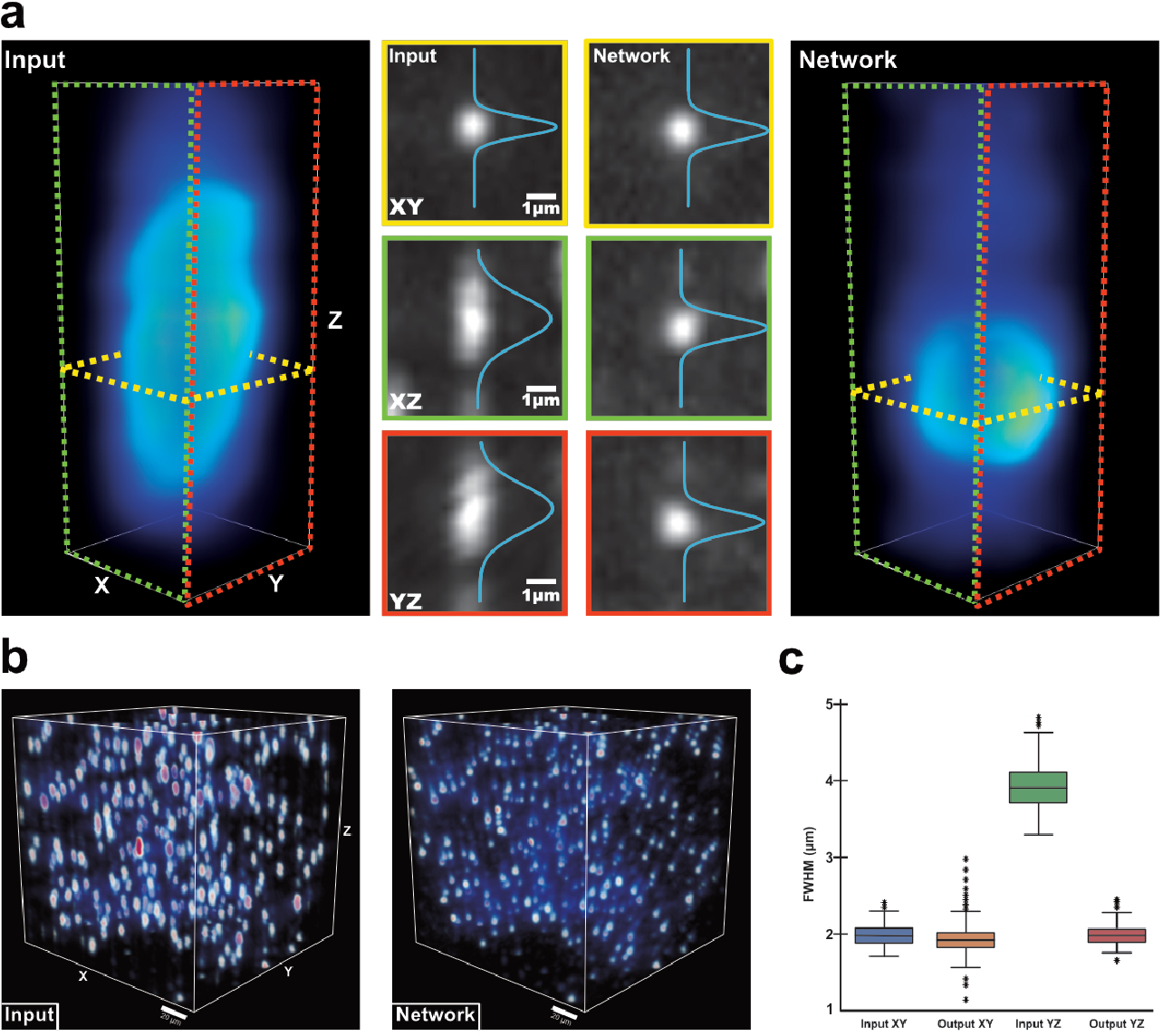 Figure 4 for Axial-to-lateral super-resolution for 3D fluorescence microscopy using unsupervised deep learning