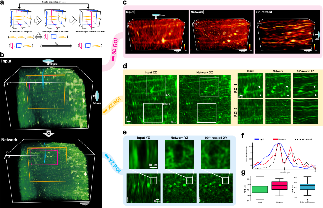 Figure 1 for Axial-to-lateral super-resolution for 3D fluorescence microscopy using unsupervised deep learning