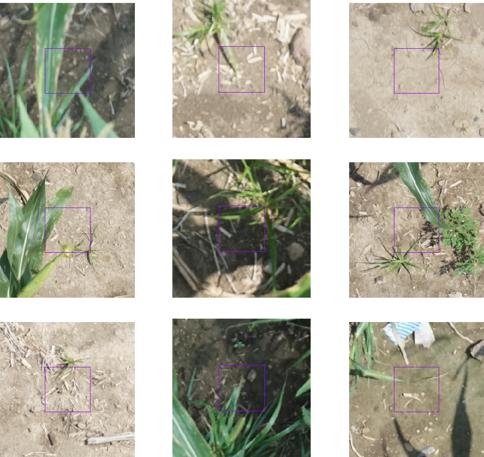 Figure 1 for Automated Grassy Weed Detection in Aerial Imagery with Context
