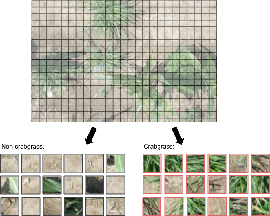 Figure 3 for Automated Grassy Weed Detection in Aerial Imagery with Context