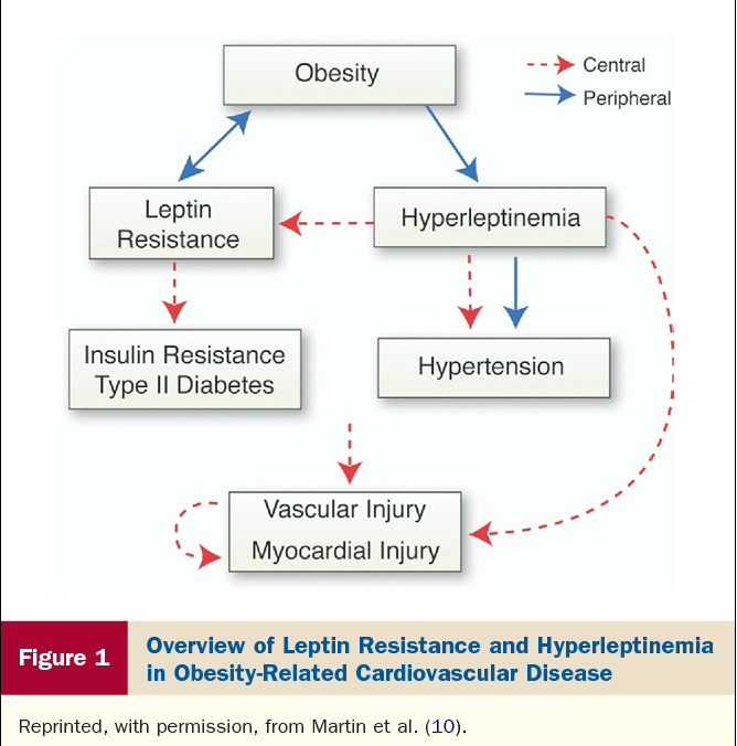 metabolic risk for cardiovascular disease eckel robert h