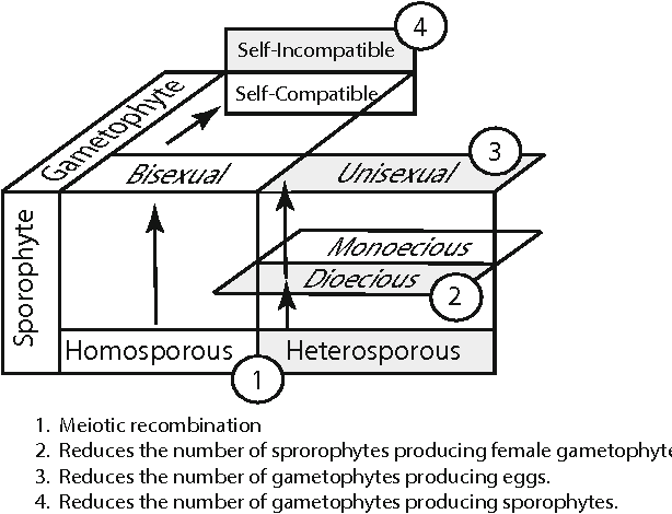 Figure 1 from the evolutionary ecology evo eco of plant asexual 1 schematic matrix identifying the four costs of land plant sexual reproduction shown ccuart Images