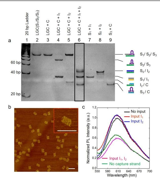 A DNAzyme-mediated logic gate for programming molecular capture and