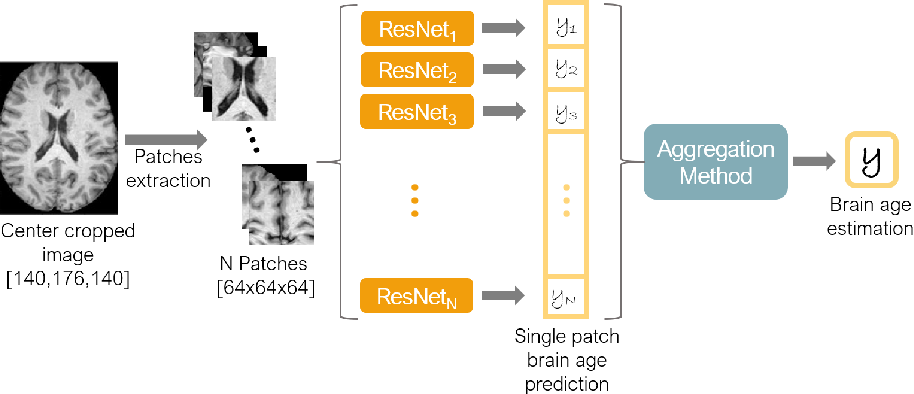 Figure 1 for Patch-based Brain Age Estimation from MR Images