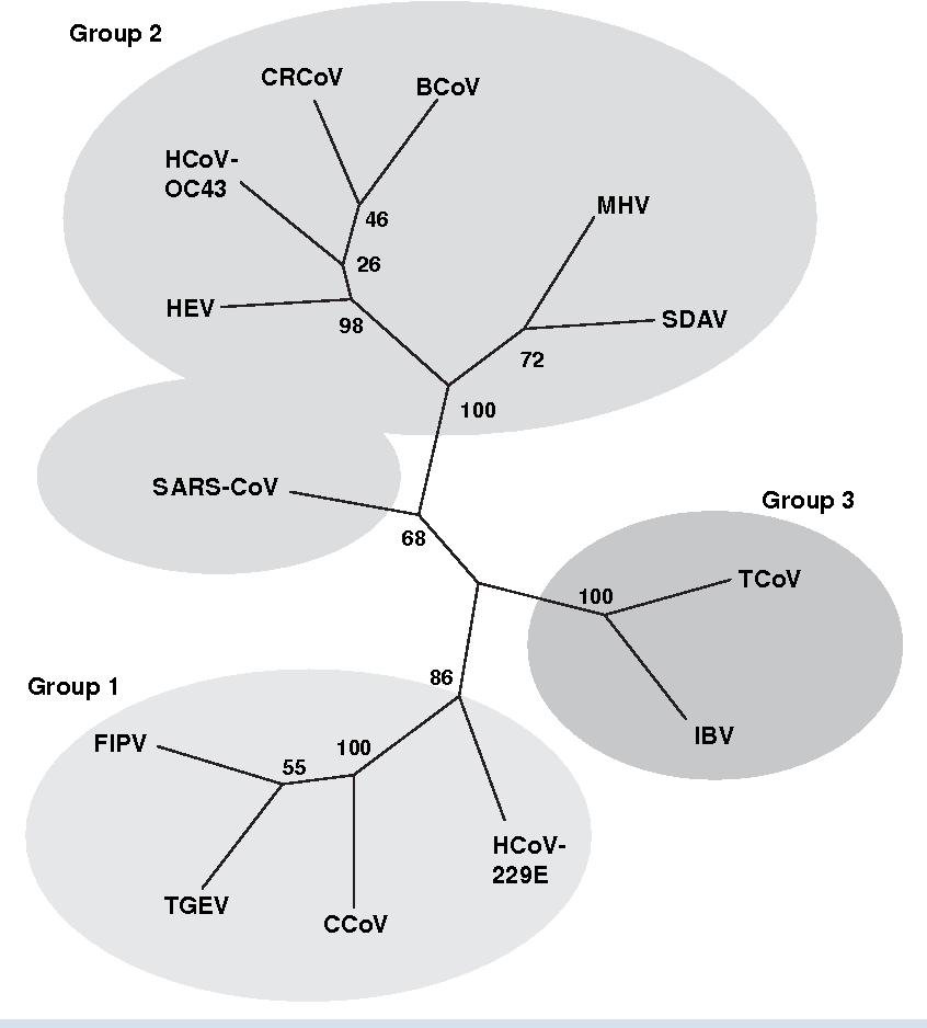 Figure 1 from Canine respiratory coronavirus: an emerging