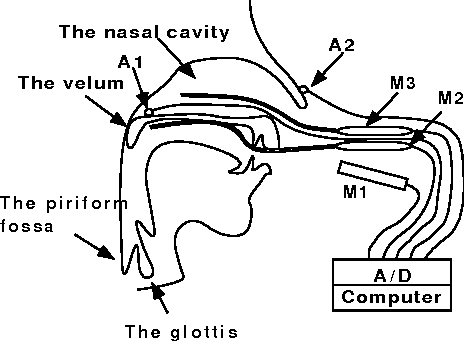 Figure 2 From An Improved Vocal Tract Model Of Vowel Production