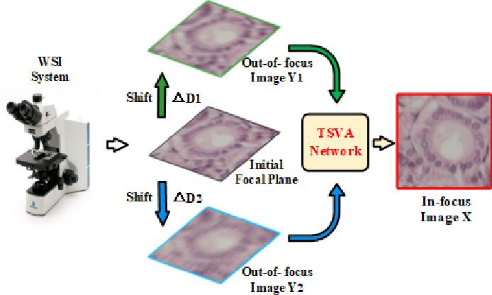 Figure 1 for Rapid Whole Slide Imaging via Learning-based Two-shot Virtual Autofocusing