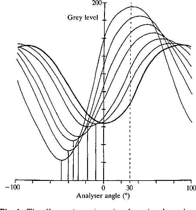 Microinterferometry Of The Movement Of Dry Matter In Fibroblasts