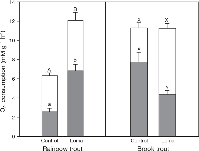 Fig. 2. Oncorhynchus mykiss and Salvelinus fontinalis. Mean (+SE) routine and maximal oxygen consumption rates for control and 4 wk Loma salmonae-infected (Loma) rainbow trout (n = 9) and brook trout (n = 8). Different letters indicate significant differences between routine (shaded) and maximal (open) rates at p > 0.05
