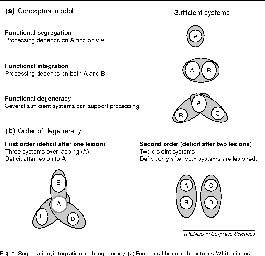 Figure 1 from Degeneracy and cognitive anatomy. - Semantic Scholar