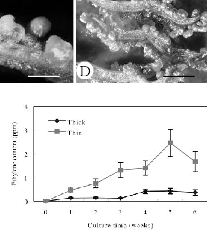An efficient direct induction of protocorm-like bodies from