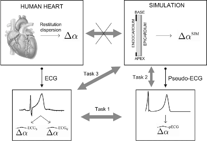 Fig. 1. Outline of the methods used in this study. Crossed arrow shows a desirable but unaccessible connection. Tasks 1, 2, and 3 represent the different comparison tasks to be done in Section III (see Section III-A– D for details).