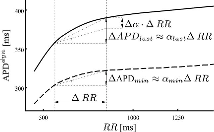 Fig. 3. Dynamic restitution curves (APDR) for two regions corresponding to APDmin (dashed line) and APDlast (solid line). Slopes αmin and αlast are estimated for a change in the RR interval.