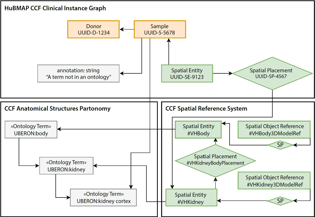 Figure 4 for Construction and Usage of a Human Body Common Coordinate Framework Comprising Clinical, Semantic, and Spatial Ontologies
