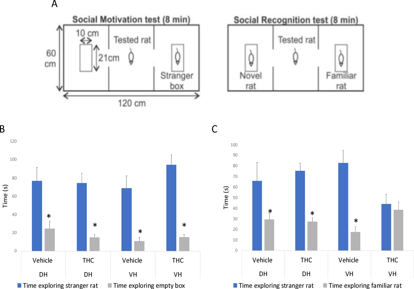 Figure 8 Social Interaction. A) Schematic of social interaction arena. B) Social Motivation test: All rodents spent significantly longer time exploring the stranger rat as opposed to the empty box. C) Social Recognition test: Rodents