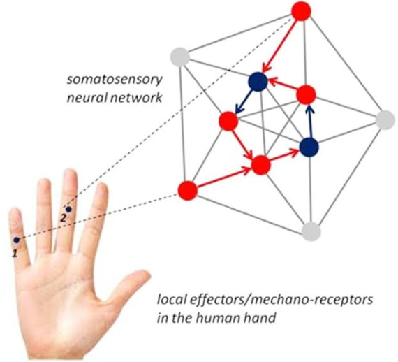 Figure 1 for Correlating grip force signals from multiple sensors highlights prehensile control strategies in a complex task-user system