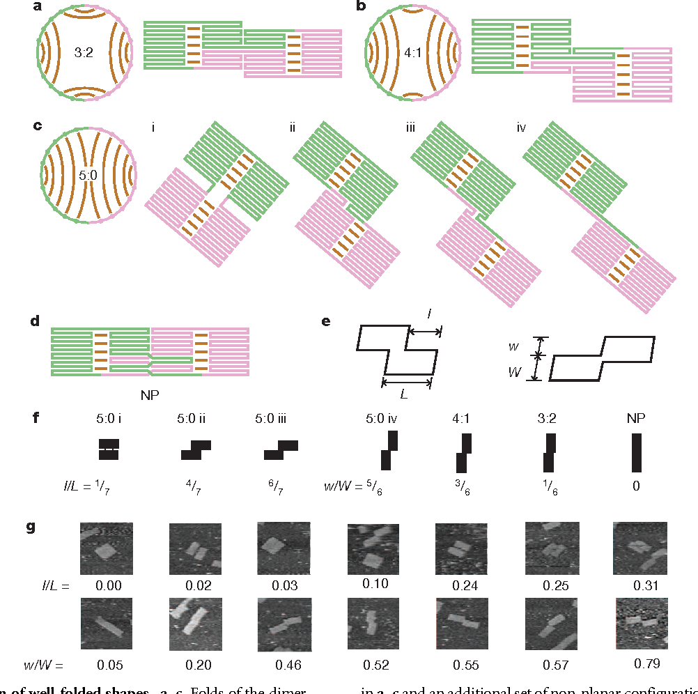 Figure 3 from Guiding the folding pathway of DNA origami - Semantic ...