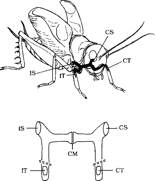Figure 2 From The Tuned Cricket