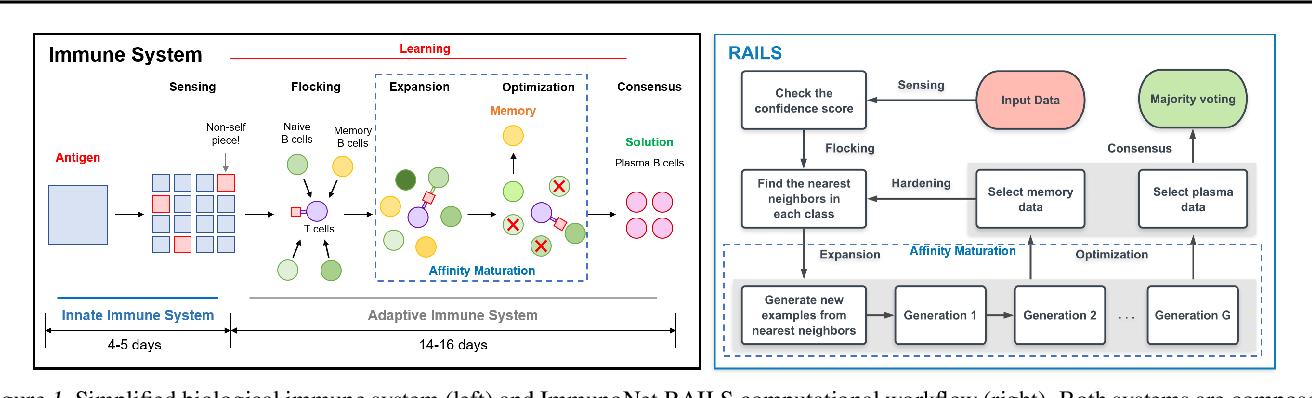 Figure 1 for Immuno-mimetic Deep Neural Networks (Immuno-Net)