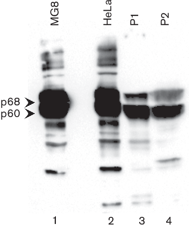 Figure 1 from Expanding the host range of small insect RNA viruses