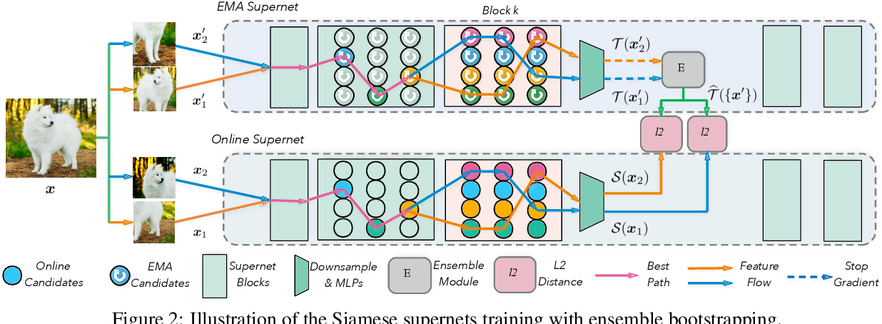 Figure 3 for BossNAS: Exploring Hybrid CNN-transformers with Block-wisely Self-supervised Neural Architecture Search