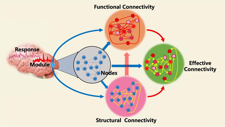 Figure 1 for A Novel Brain Decoding Method: a Correlation Network Framework for Revealing Brain Connections