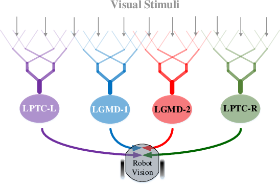 Figure 1 for Complementary Visual Neuronal Systems Model for Collision Sensing