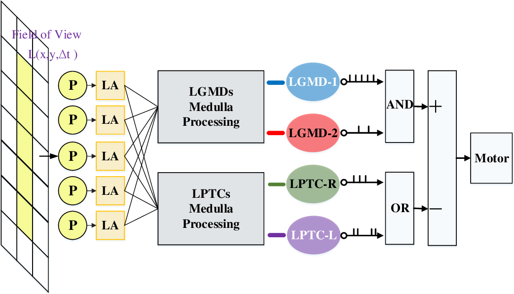Figure 2 for Complementary Visual Neuronal Systems Model for Collision Sensing