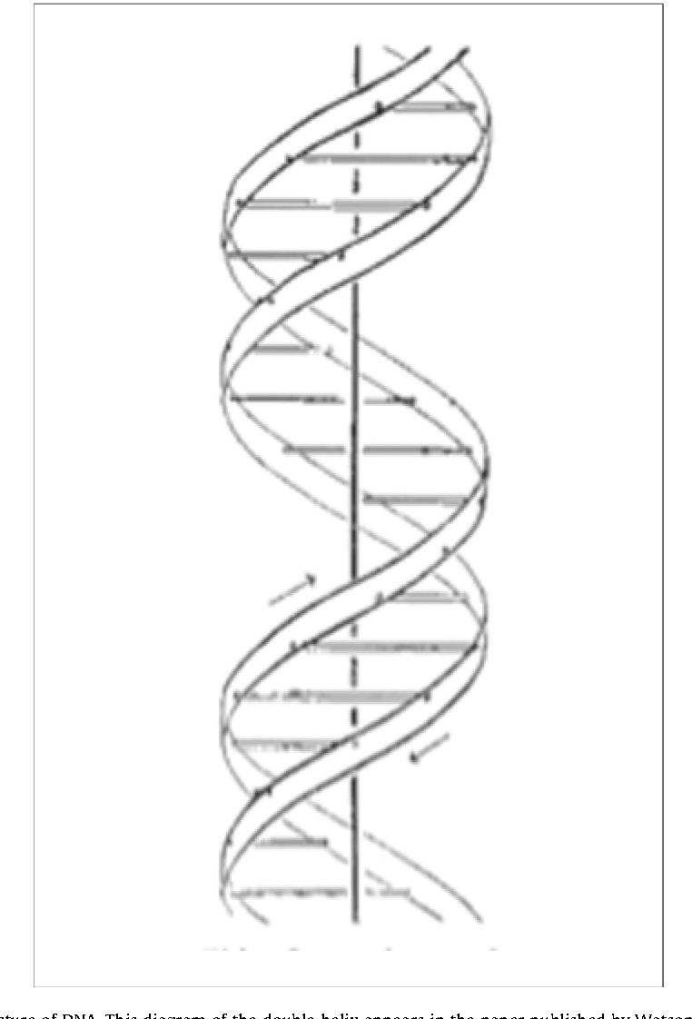 a schematic diagram of the structure of dna  this diagram of