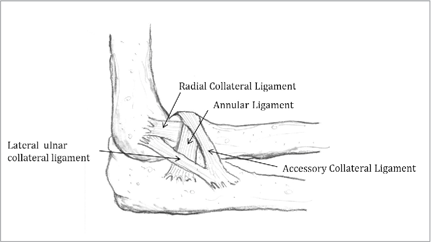 Figure 1 From Medial Elbow Injury In Young Throwing Athletes