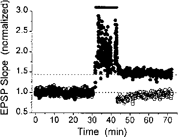 Figure 6. Natural Stimulus Pattern Induces LTPis able to cause long-term changes in synaptic strength. Field EPSP slope versus time for two independent pathways in the same slice. At 30 min., a 256 point natural stimulus pattern was applied to the test pathway (closed circles), which caused a longDiscussion lasting potentiation of the response to constant frequency (0.17 Hz) stimulation. Solid bar indicates when the natural stimulus patternWe have reported here what we believe are the first was applied. The control pathway (open circles), which was not experiments in which natural action potential trains re- stimulated with the natural pattern, was not potentiated. Responses corded in vivo from awake animals are used as stimu- have been normalized by their values at slow (0.17 Hz), constant frequency stimulation during the initial 30 min.lus patterns for synaptic recordings in vitro. Synaptic