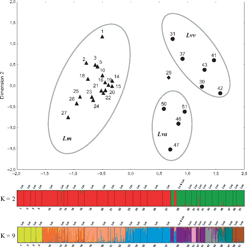 Fig. 4 Two-dimensional scaling of the matrix of pairwise GST″ between Lissotriton montandoni (Lm) and L. vulgaris (Lva, L. v. ampelensis; Lvv, L. v. vulgaris), populations and genetic structure inferred by Structure for K = 2 and K = 9.