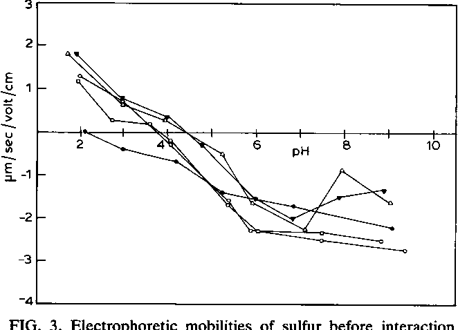 FIG. 3. Electrophoretic mobilities of sulfur before interaction with T. ferrooxidans (0) and after interaction with T. ferrooxidans for 1 h (0), 24 h (0), 120 h (A), and 240 h (V).