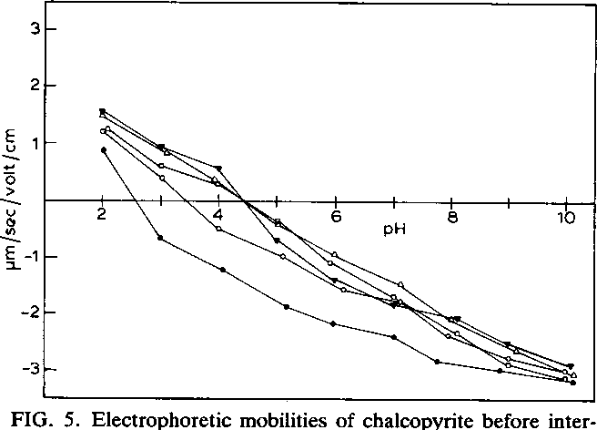 FIG. 5. Electrophoretic mobilities of chalcopyrite before interaction with T. ferrooxidans (0) and after interaction with T. ferrooxidans for 1 h (0), 24 h (C), 120 h (A), and 240 h (V).
