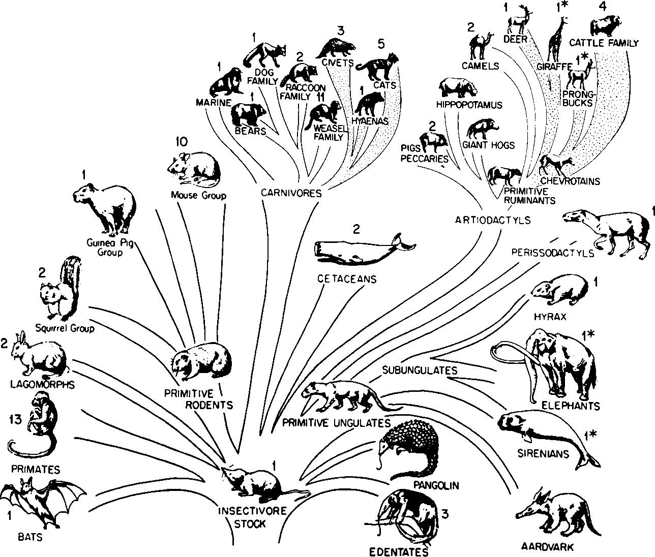 Figure 3 From Evolution Of Mammalian Hemoglobin Function Semantic