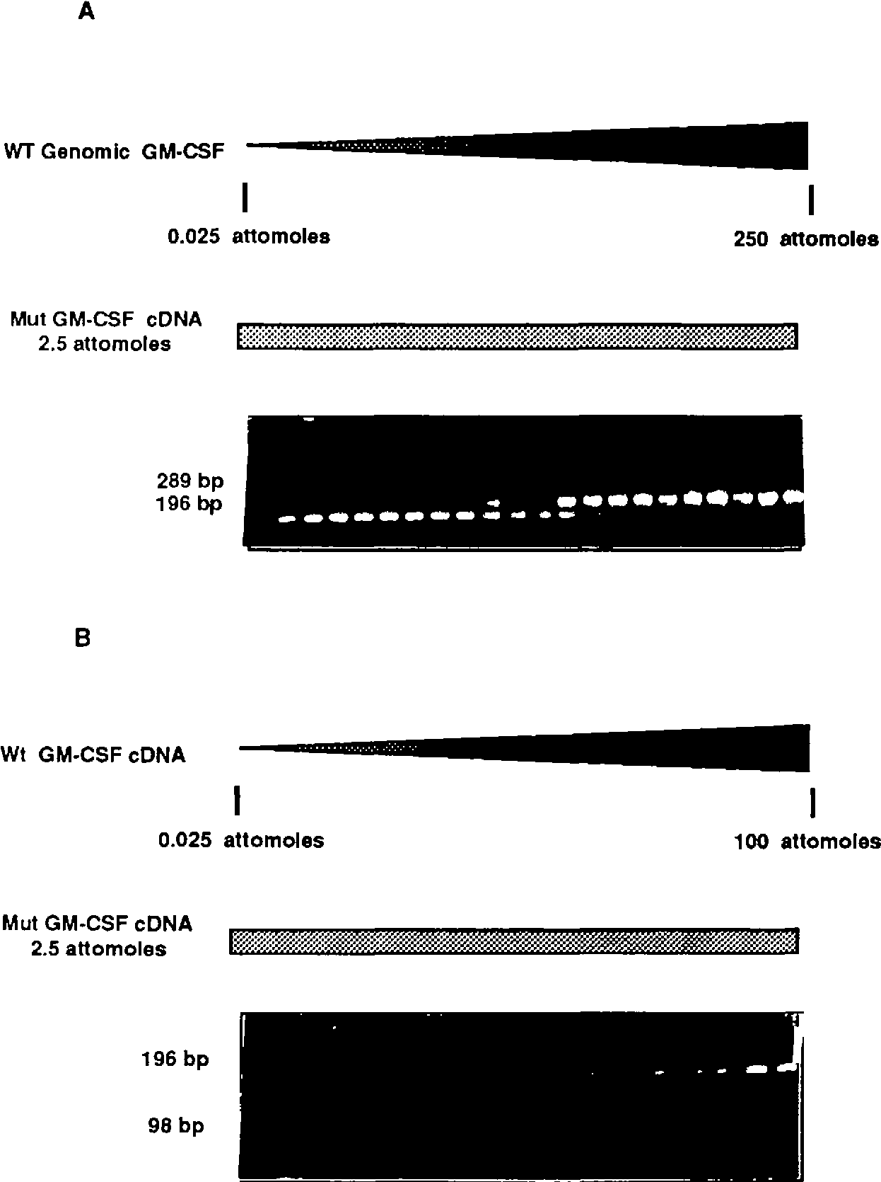 Figure 6. Use of mutant GM-CSF template in competitive PCR. A fixed concentration of mutant GM-CSF (2.5 attomoles/tube) was added to a master mix which contained dNTP (200 ^M in each, including [a-^PldCTP at 50 jiCi/ml), GM-CSF primers 1 and 2 (20 pmoles/tube), 1 XPCR buffer, Taq polymerase (0.1 /d/tiibe). The master mix containing the mutant GM-CSF cDNA was aliquoted into separate tubes containing (A) genomic GM-CSF DNA ranging in concentration from 0.025 to 250/tube or (B) wikftype GM-CSF cDNA ranging in concentration from 0.025 to 100 attomoles/tube. Samples were amplified for 40 cycles of PCR as described above, and electrophoresed on 2% Nusievc/1% agarose gels. Input mutant GM-CSF cDNA is calculated as described (4). Briefly, the ratio of mutant GM-CSF cDNA/genomk GM-CSF is determined for each tube by excising and counting the appropriate bands, and plotted as a function of input genomic GM-CSF in the titration series. Where the ratio is 1.0, input genomic GM-CSF from the titration series is equivalent to the amount of input mutant GM-CSF cDNA.