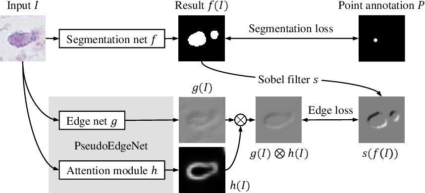 Figure 1 for PseudoEdgeNet: Nuclei Segmentation only with Point Annotations